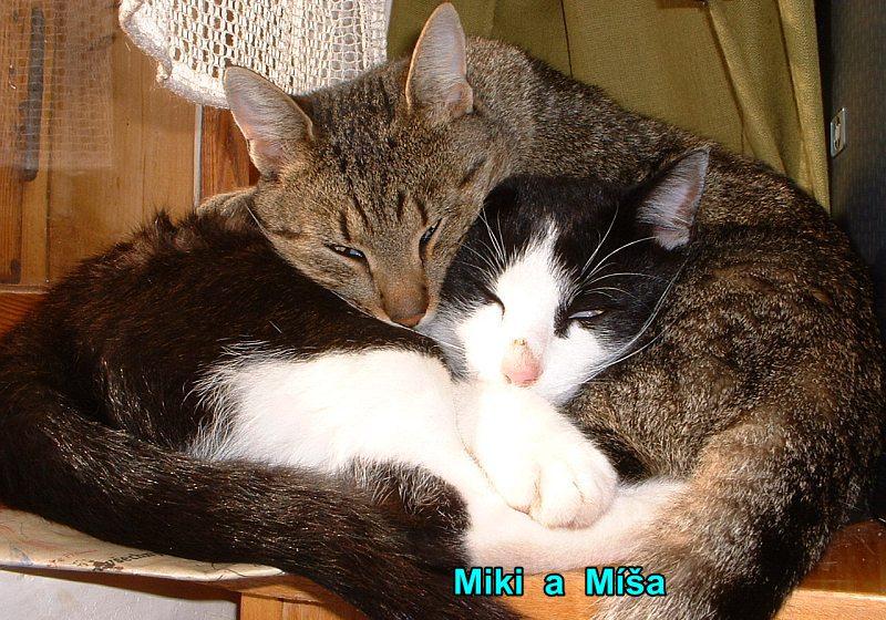 Miki a Míša